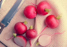 Young fresh red radishes whole, and cut in half and rustic canva Royalty Free Stock Photography