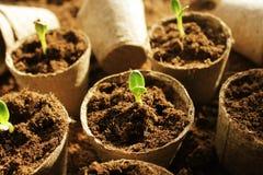 Young fresh seedling Stock Image