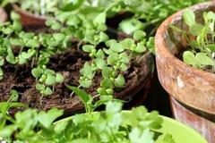 Young fresh seedlings Stock Photography