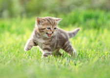 Young funny cat meowing in nature Stock Photos