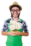 Young funny gardener with pot of camomiles Stock Photos