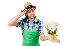 Young funny gardener with pot of camomiles Royalty Free Stock Photo