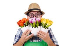 Young funny gardener with tulips isolated oin Royalty Free Stock Images