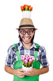 Young funny gardener with tulips isolated oin Stock Photography