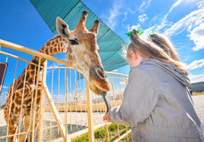 Young funny giraffe and beautiful little girl at the zoo Royalty Free Stock Photos