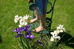 Young Gardener 2. Young boy waters his orchids with the aid of a garden chair and watering can Stock Photography