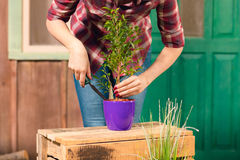 Young gardener in checkered shirt cultivated plant in pot Stock Images