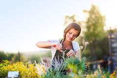 Young gardener cutting little flower plant, green sunny nature Stock Images