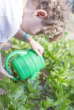 Young gardener farming the garden Royalty Free Stock Photos