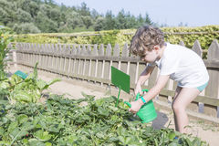 Young gardener at the garden Royalty Free Stock Photography