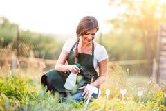 Young gardener in green apron sprinkling plants, garden stock photos