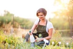 Young gardener in green apron sprinkling plants, garden Stock Photography