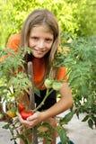 Young gardener grown tomatoes Stock Image