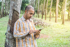 Young gardener man holding digital tablet in garden. Young gardener man smiling while holding digital tablet in rubber tree garden Royalty Free Stock Image