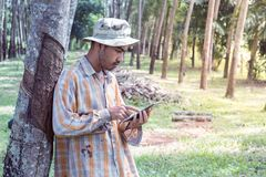Young gardener man holding digital tablet in garden. Young gardener man smiling while holding digital tablet in rubber tree garden Royalty Free Stock Images