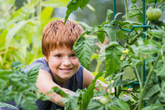 Young gardener Stock Photography