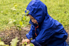 Young gardener siiting on backyard and playing with a plants. Cute baby boy in a blue raincoat sitting on the grass. Stock Photography