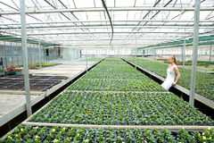 Young gardener woman standing in a greenhouse Stock Image