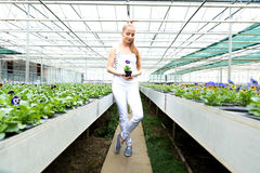 Young gardener woman standing in a greenhouse, holding a flower Stock Image