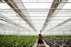 Young gardener working with plants in greenhouse. Young concentrated worker in apron holding folder and working with green plants in greenhouse Stock Photos