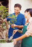 Young gardeners with bonsai Royalty Free Stock Photo