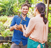 Young gardeners with bonsai Royalty Free Stock Image