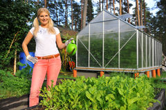 Young gardening woman watering salad plant. In her garden. view on greenhouse Royalty Free Stock Images