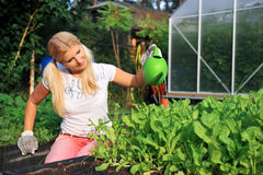 Young gardening woman watering salad plants. Outdoor. view on greenhouse Royalty Free Stock Photos