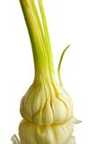 Young garlic. On a white background Royalty Free Stock Photography