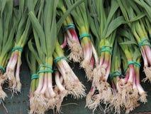 Young garlic Royalty Free Stock Photo