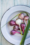 Young Garlic in a bowl Stock Image
