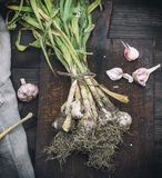 Young garlic on a brown wooden board Royalty Free Stock Images