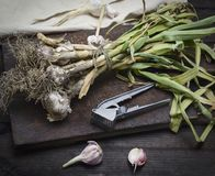 Young garlic tied in a bundle with a rope Royalty Free Stock Images