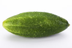 Young gherkin Royalty Free Stock Photography