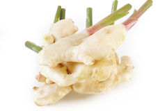 Young ginger root Royalty Free Stock Photography