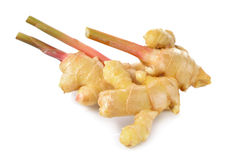 Young ginger with stem on white Royalty Free Stock Photos