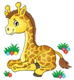 Young giraffe theme image 1 Stock Images