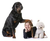 Free Young Girl And Dogs Royalty Free Stock Images - 111552899