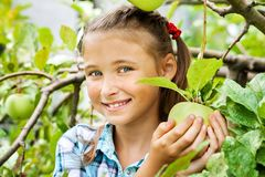 Young girl in an apple orchard royalty free stock photos