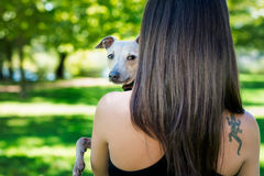 Young girl  from back side  holding greyhound Stock Photography