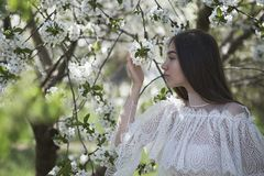 Young girl in blooming trees royalty free stock photos