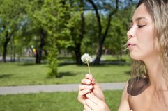 Young girl blowing on the dandelion Stock Photography