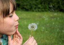 Young Girl Blowing Dandelion Stock Image