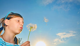 Young girl blowing dandelion Stock Images