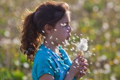Young girl blows a dandelion Stock Photos