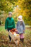 Young girl and boy in autumn park with wheelbarrow. Vibrant autumn background. harvest Stock Photos