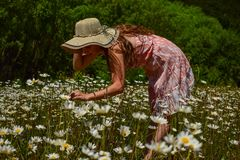 Young girl enjoys the daisies covering a meadow royalty free stock images