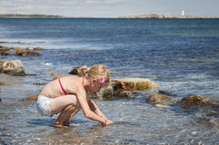 Young girl collecting seashells Stock Images