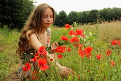 Young girl collects poppies on field Stock Photos