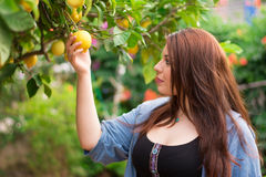 Young girl cutting a lemon from the tree Stock Photos